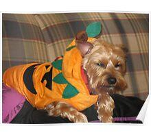 Biscuits Halloween Costume Poster