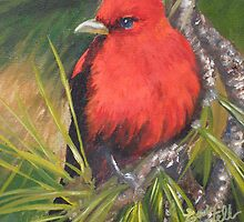 Scarlet Tanager--A Study of Wild Birds by Chutharat Sentell