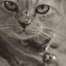 I know...I know...meow... by Kornrawiee