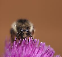 Big bumble by Al Williscroft