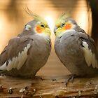 In love! by Ian Middleton