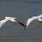 Gulls by photosbyjoe