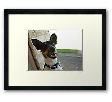 Mini Foxy / Jack Russel Framed Print