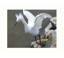 Snowy Egret on Tip Toes Art Print