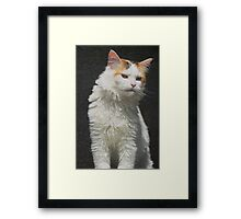 Screen Cat Framed Print