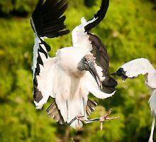 Woodstork Landing by John Hartung