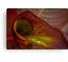 Lily close-up Canvas Print