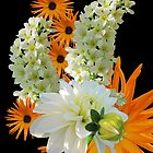 Orange and white by orko