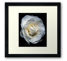 Tom's Camelia 20110810 1547 Framed Print
