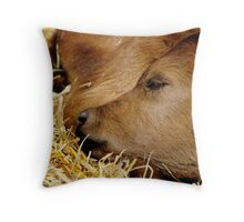 Bobby Calf Throw Pillow