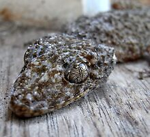 leaf tailed gecko by Floralynne