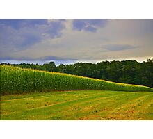 Morning in the Cornfield  Photographic Print