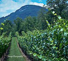 Yonah Mountains Vineyards by jenseye