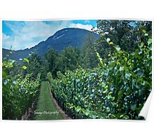 Yonah Mountains Vineyards Poster