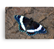 Butterfly In The Sand Canvas Print