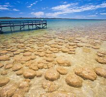 Lake Clifton, thrombolites , Western Australia by Marc Russo