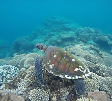Sea Turtle, Coral bay, Western Australia by Marc Russo