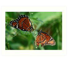 Twin butterflies Art Print
