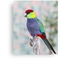Red-capped Parrot Canvas Print