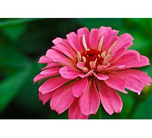 Pinky Touch Photographic Print