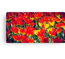 Fire Tulips Canvas Print