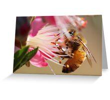 bee on nectarine blossom Greeting Card