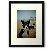 Colorized Dog Framed Print