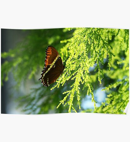 Butterfly Greens by Liane Pinel Poster