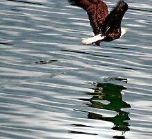 Surreptitious Eagle by Gail Bridger