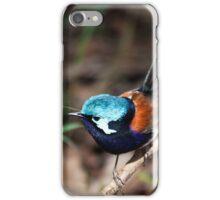 Red wing fairy Wren, Pemberton, Southwest Australia iPhone Case/Skin