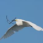 Is It Nesting Time by Deborah  Benoit
