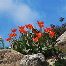 Tulip Season  by Irina777