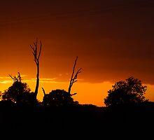 Summer Sun by Jessica Loftus