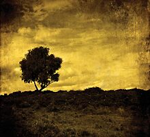 Lone Tree by Anne Staub