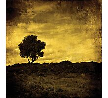 Lone Tree Photographic Print