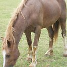 Beautifull Dylan the wonder horse by Taffysdelight