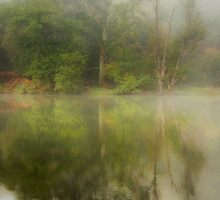 Morning Mist - Cannop Ponds by David Tinsley