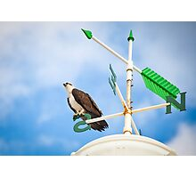 Osprey on a compass Photographic Print