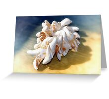 Viet Nam Sea Shells  Greeting Card