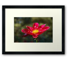 Up Close Framed Print