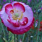 Poppy standing big and bold by DIANE  FIFIELD