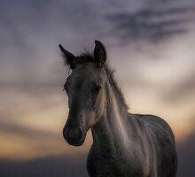Excuse me, do you speak equus? by Henri Ton