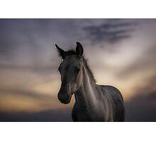 Excuse me, do you speak equus? Photographic Print