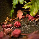 Berries by David Preston
