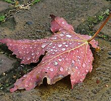 Raindrops and Autumn  by ienemien