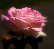 Roses Of Portland ~ Part One by artisandelimage