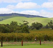 Barossa Valley #2 by aussiedi