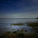 THE OCEAN GRASS by leonie7