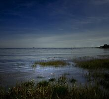 THE OCEAN GRASS by leonie7