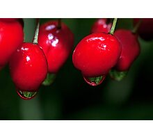 Berry Wet Photographic Print